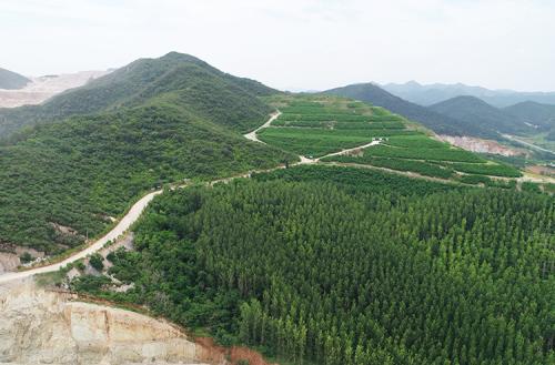 采矿厂植被恢复区域